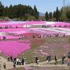 見応え十分!!秩父の芝桜を見に行って来ました☆見頃はこれからです♪