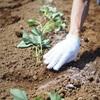 苗植え体験。自然と触れ合ってきました。