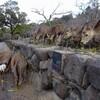 冬の奈良公園の風景〜野菜屑を貰う鹿〜