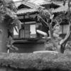 【今日の1枚】旧家の庭にマッチする、古井戸と旧式手漕ぎポンプ