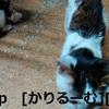 2018/12/01猫スズとハナの写真1812011944