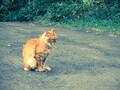 定山渓温泉は猫のパラダイス。温泉と猫で二重に癒されるスポット。