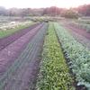 農園日誌ー夏野菜