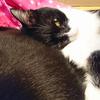 今日の黒猫モモ&白黒猫ナナの動画ー837
