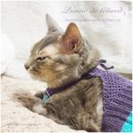 うらやましい猫|シニア猫のための誕生日プレゼント