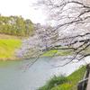 桜に酔う日(お花見1)