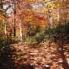 山の健康管理 VOL.08 「運動の秋、体力不足と栄養補給の関係、見直してみました。」