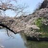 確定申告祭り4/15までPart2・千鳥ヶ淵の桜満開
