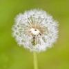 二十四節気  4月20日より穀雨。穀物の種をまくと成長に欠かせない雨にも恵まれることからいいます。