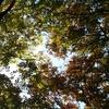 働き女子と母である皆さまへ 秋の木漏れ日と必要とされるということ