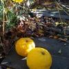 2019年 柚の収穫〜娘の摂食障害の思い出