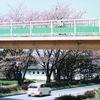ナニコレ珍百景で茅野市のリス専用歩道橋が紹介されていました!!