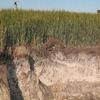 米サウスダコタで、石油採掘による海水漏れで農地がダメージ