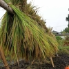 明日から長良川自然学校の活動が始まります。