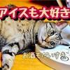 【凪のお暇】チョコミントハイボールとガリガリ君カクテル【漫画飯】
