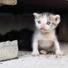 『干物女子と幸せを呼ぶ猫』- 売れるためのウソは正義なのか?
