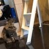 飛び猫チャレンジ失敗