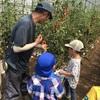 【7月イベント報告】野菜収穫体験&カレー作り