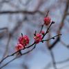 12月下旬:駒沢オリンピック公園周辺をお写んぽ。
