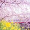 【写真】〜春の便り〜