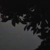 鎌倉中央公園でホタル