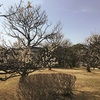 旧細川刑部邸の梅園|梅園が無料開放  熊本市