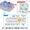 【医学部編入】生命科学講義・細胞の営み① ~細胞膜~
