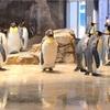 2019 GW【長崎情報】ペンギン水族館
