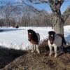 ☃️北海道・矢臼別(やうすべつ)は雪です☃️。矢臼別での日米両国軍隊の演習について。