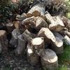 機械での薪割り ほぼ満杯 Chopping wood by machine