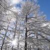 カレンダー 季樹歳彩