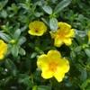 ミモザ・ガーデンの日記 恵比寿ガーデン