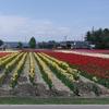 北海道の春のイベント情報