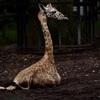 動物園はコレ一本!標準域から超望遠まで…SIGMA 60-600mm活用術。