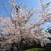 夙川公園へさくらを見に行ってきました…20190409