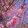 習い事の宿題(梅の花)