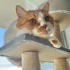 青空をバックにした愛猫の逆光写真を加工してみた。