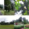 スリランカ⑭ ペラデニア植物園