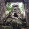 #アンコールワット個人ツアー(491) #アンコールワットの郊外密林の遺跡(タ•ネイ)寺院[TA NEI]