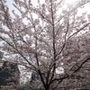 水道橋付近の神田川沿いの桜と、昌平橋近くの味の萬楽のラーメン!!!