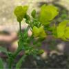 畑の花と昆虫の独り言