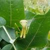 地球園  芳香蒸留水(herb water)は虚空蔵菩薩様の香り