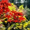 笠置山の紅葉