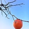柿色のお話⑴ 歌舞伎の定式幕