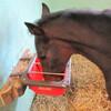 育成馬ブログ 生産編①「その1」