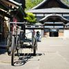 鮮やかなサトザクラ咲く、江戸東京たてもの園