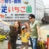 いちご🍓狩り情報5/5(金)㊗️子供の日休園日お休みです。