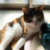 【愛猫日記】毎日アンヌさん#236