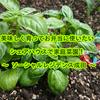 美味しく育ってお弁当に使いたい、シェアハウスで家庭菜園! ~ ソーシャルレジデンス成田 ~