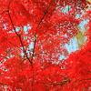 紅葉⑩ ピーク!